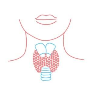 Funkce štítné žlázy a její příznaky